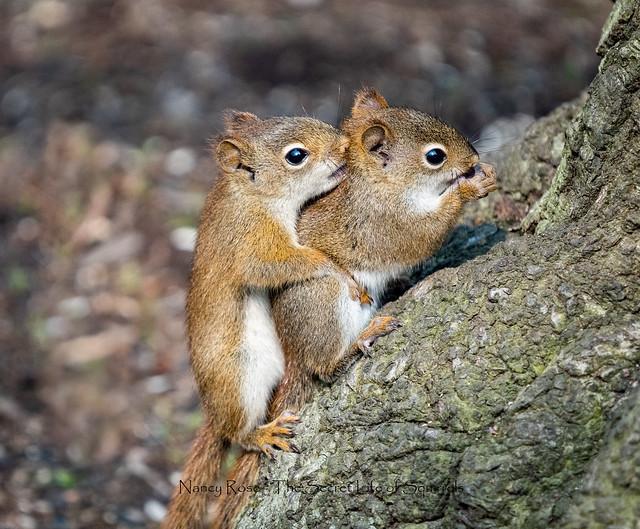 everyone needs a hug these days!!