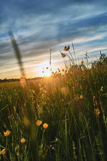 tender sundown