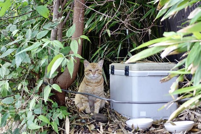 Today's Cat@2021−05−25
