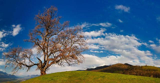 Panorama du Chêne de Venon