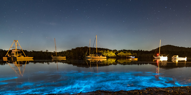 Bioluminescence glow in the bay nightscape with boats