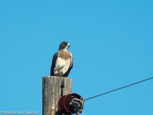 AZbirds-4
