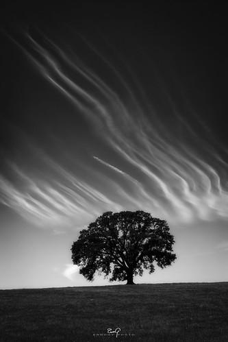 Oak Striped Sky B&W