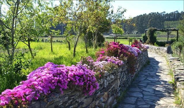 Camino a la Fuente de Vilaxoane - Foz (Lugo)