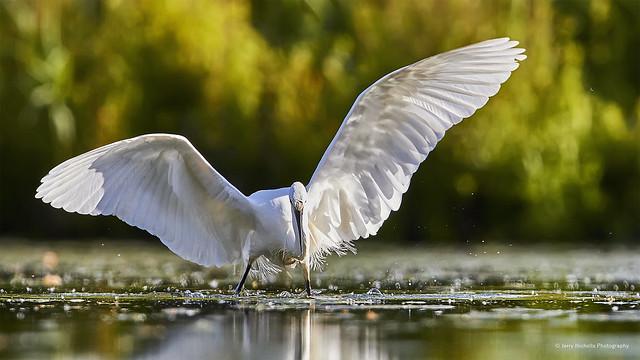Wings open wide