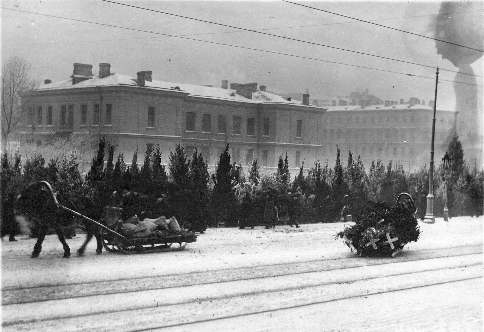 1913. Предпраздничный ёлочный базар