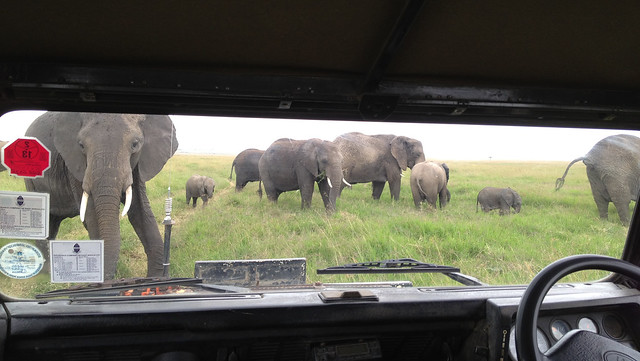 Elephant vs Land Rover - Uh oh... Maasai Mara, Kenya, 2012.