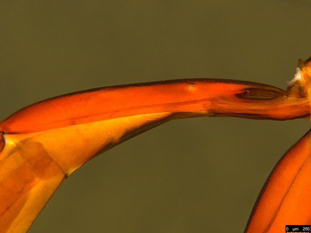 10d - Ichneumonidae sp.