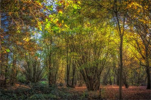 autumn fall belgium mechelen muizen landscape nature tree