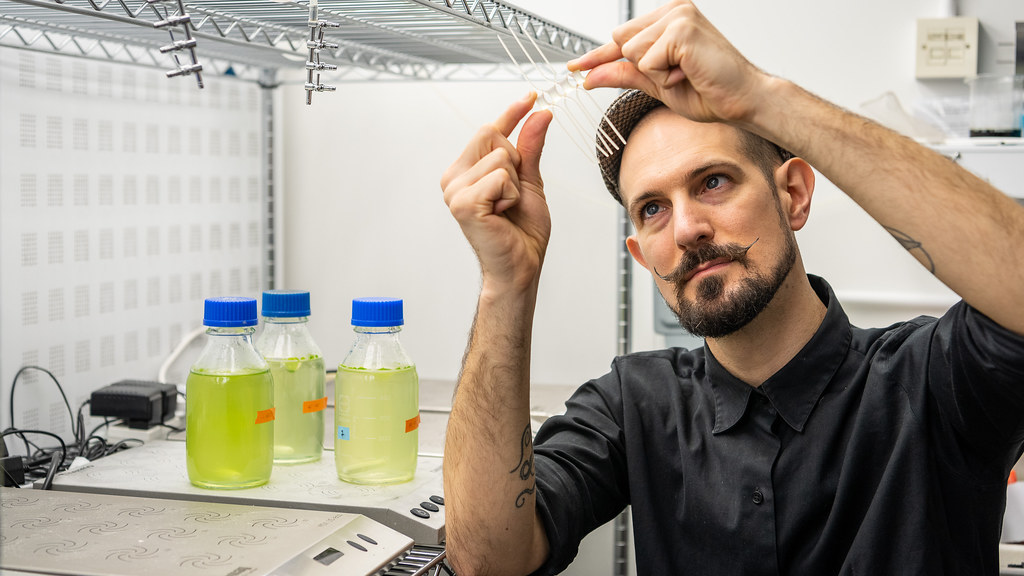 A researcher looking at phytoplankton.
