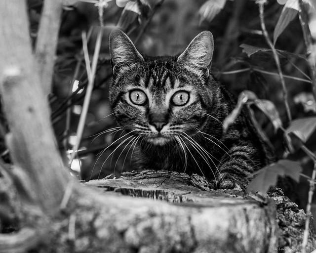 CAT ON THE TREE - BW