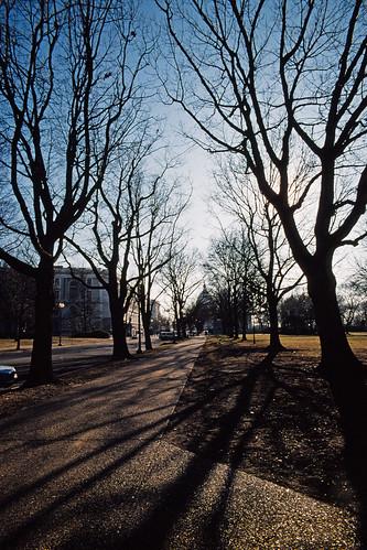 Winter Shadows in Washington DC