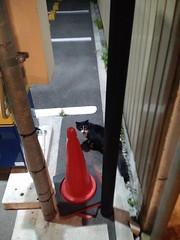 Takamatsu cat, April 2016