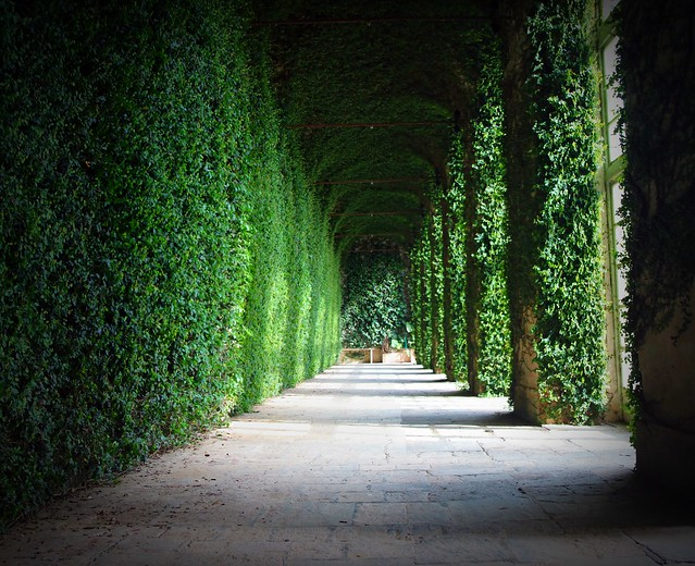 cattedrale verde - green cathedral