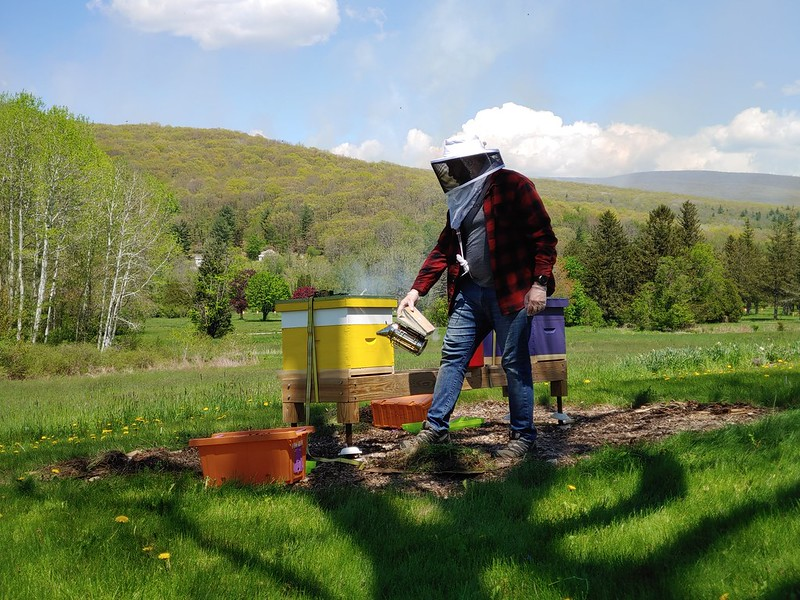 Bees moved to their hives