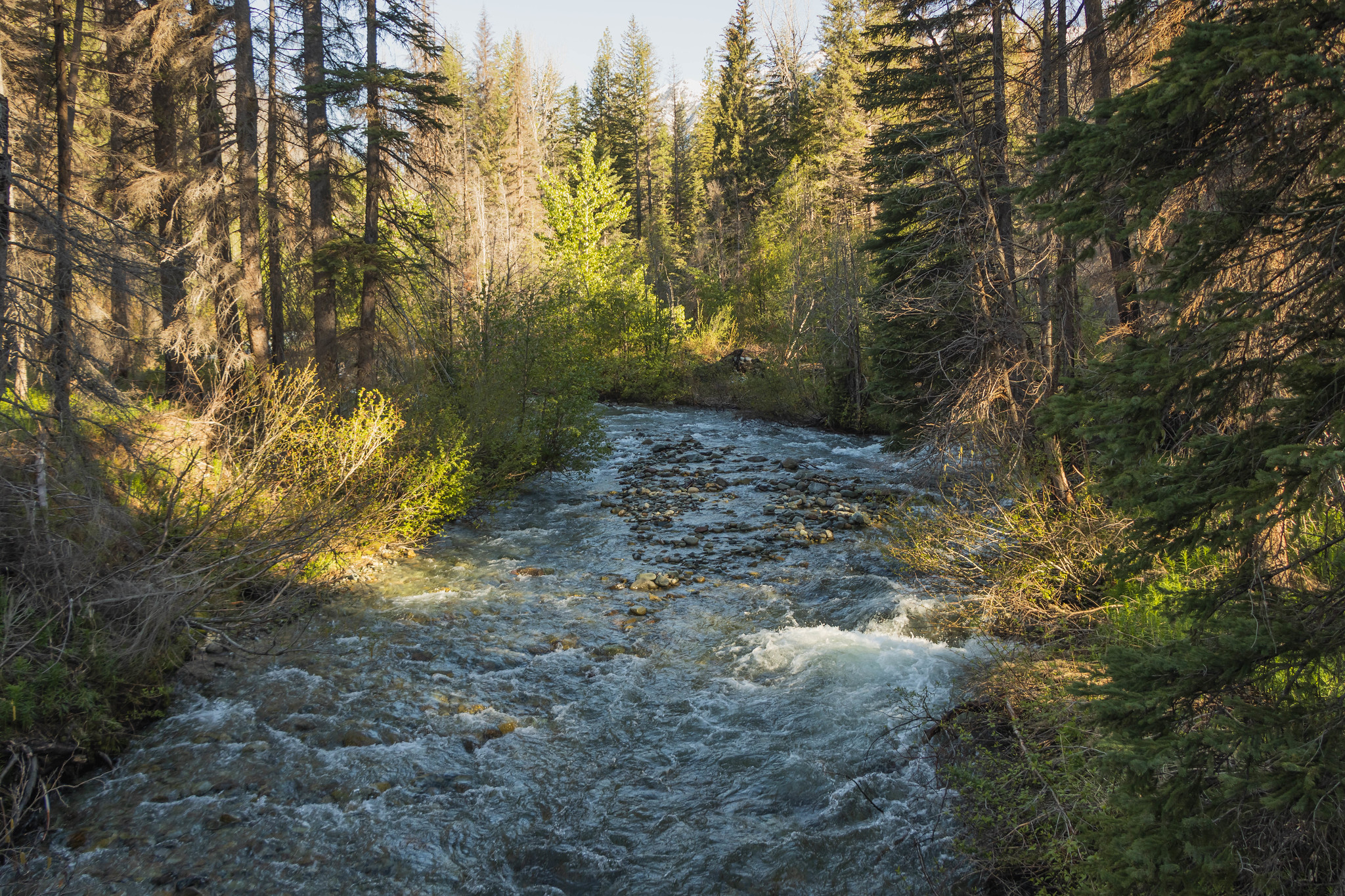 Twisp River in the AM