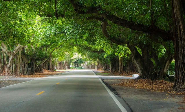 A Quiet Drive On Old Cutler Road