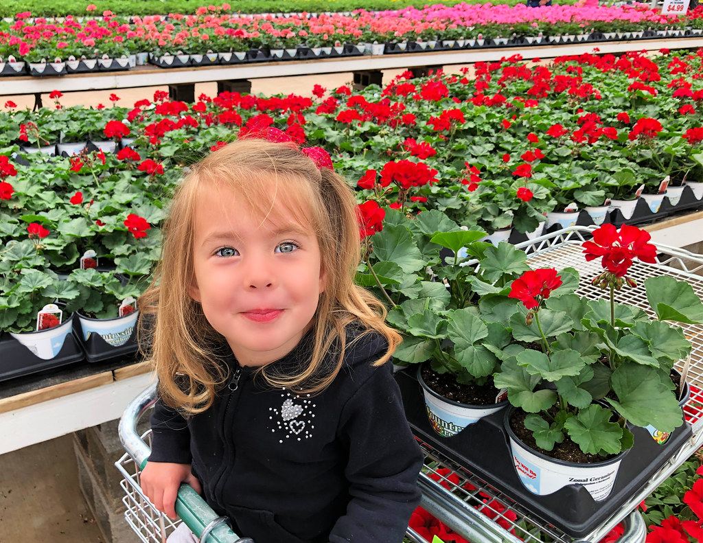 buying annuals