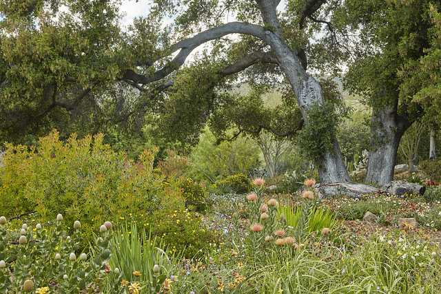 166-167_arched tree_CA