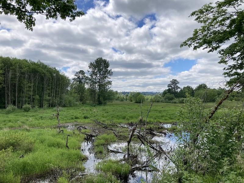 Snoqualmie Valley Trail Wetlands 1