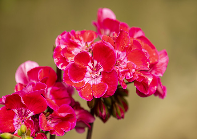 Flowers (EXPLORED)