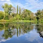 Reflections on the lake at Haslam Park, Preston