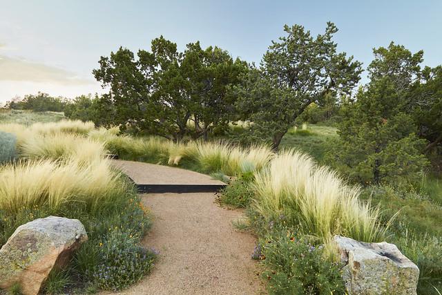 54-55_feathergrass walkway_CA