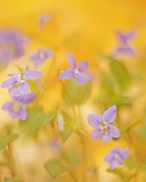 flowerspattern-9