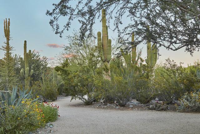 22-23_Cactus Trail_CA (1)