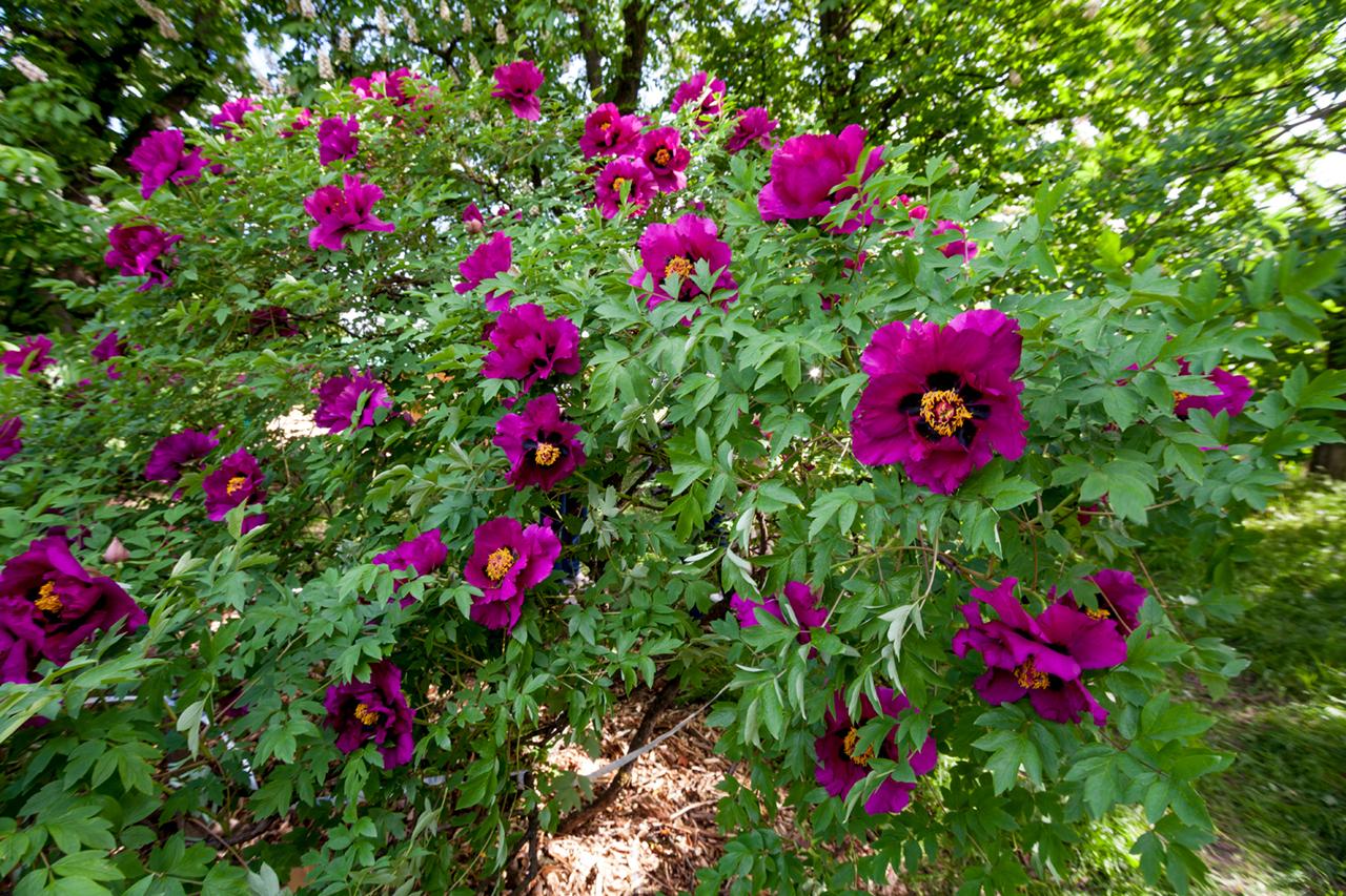 Ботанический сад (продолжение) IMG_0121