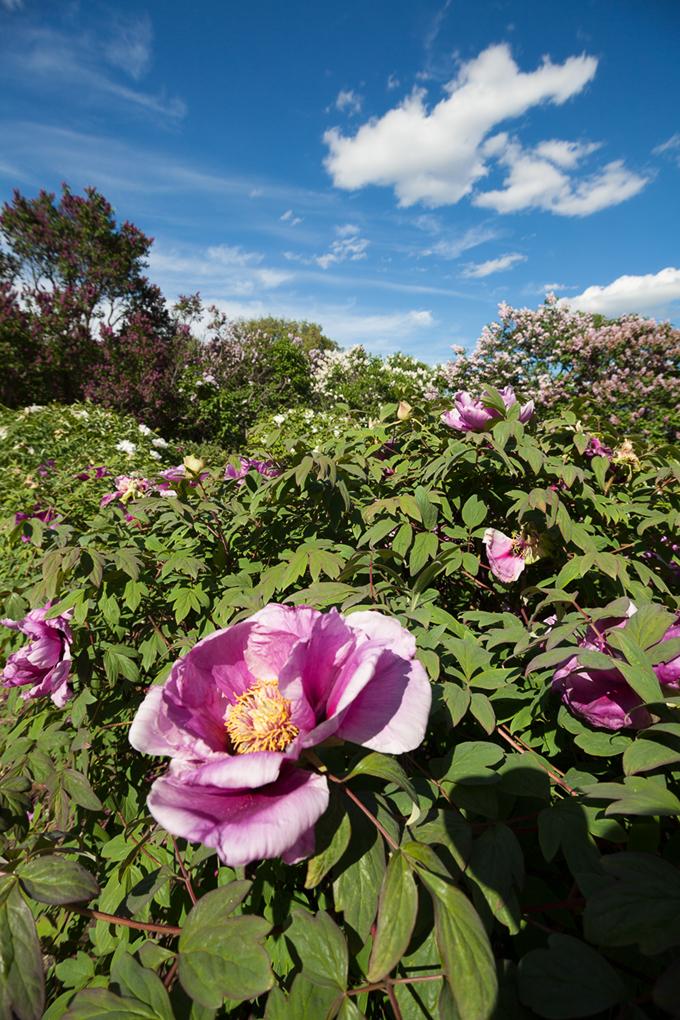 Ботанический сад (продолжение) IMG_0048