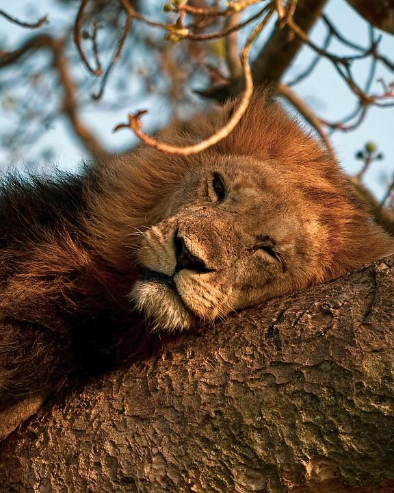 Fotografia em Palavras: Em cima da árvore