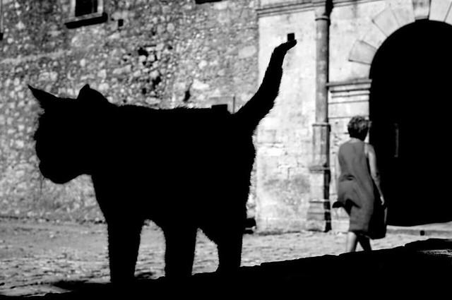 le chat noir des vieilles cites HBM Mémoire2cité allias Mémoire2ville