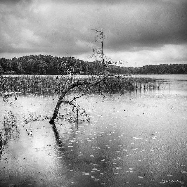 Crooked Tree In Whitford Lake