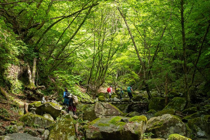 新緑を歩く登山者