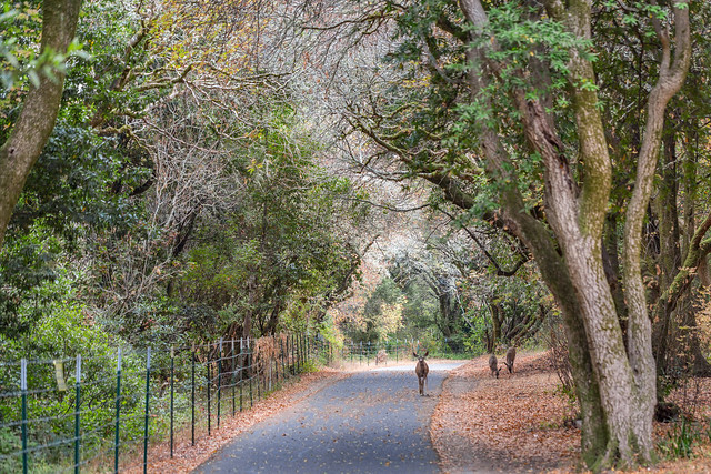 Armchair Traveling - Sharing the Trail, Sawyer Camp Trail, San Mateo