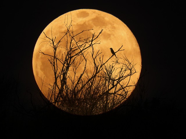 the moon and the bird 😍🌝