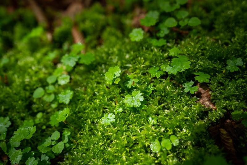 苔のむす西丹沢