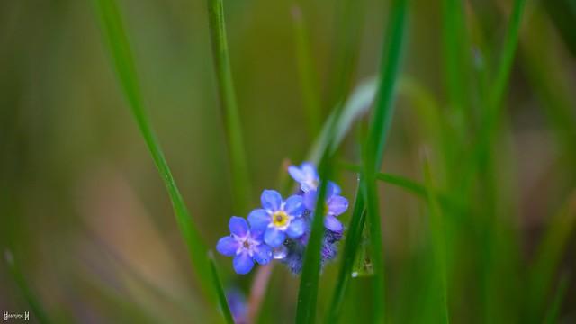 9781 - A little Blue