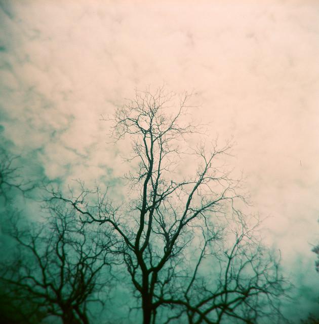 tree, frame 3