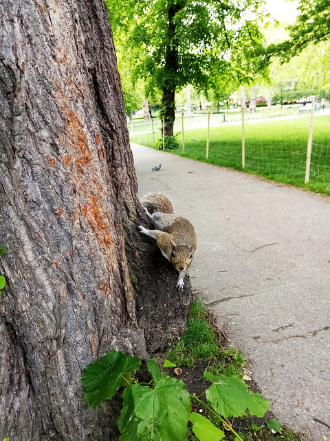 This is Mr. Jenkins my polite & lovely squirrel friend️