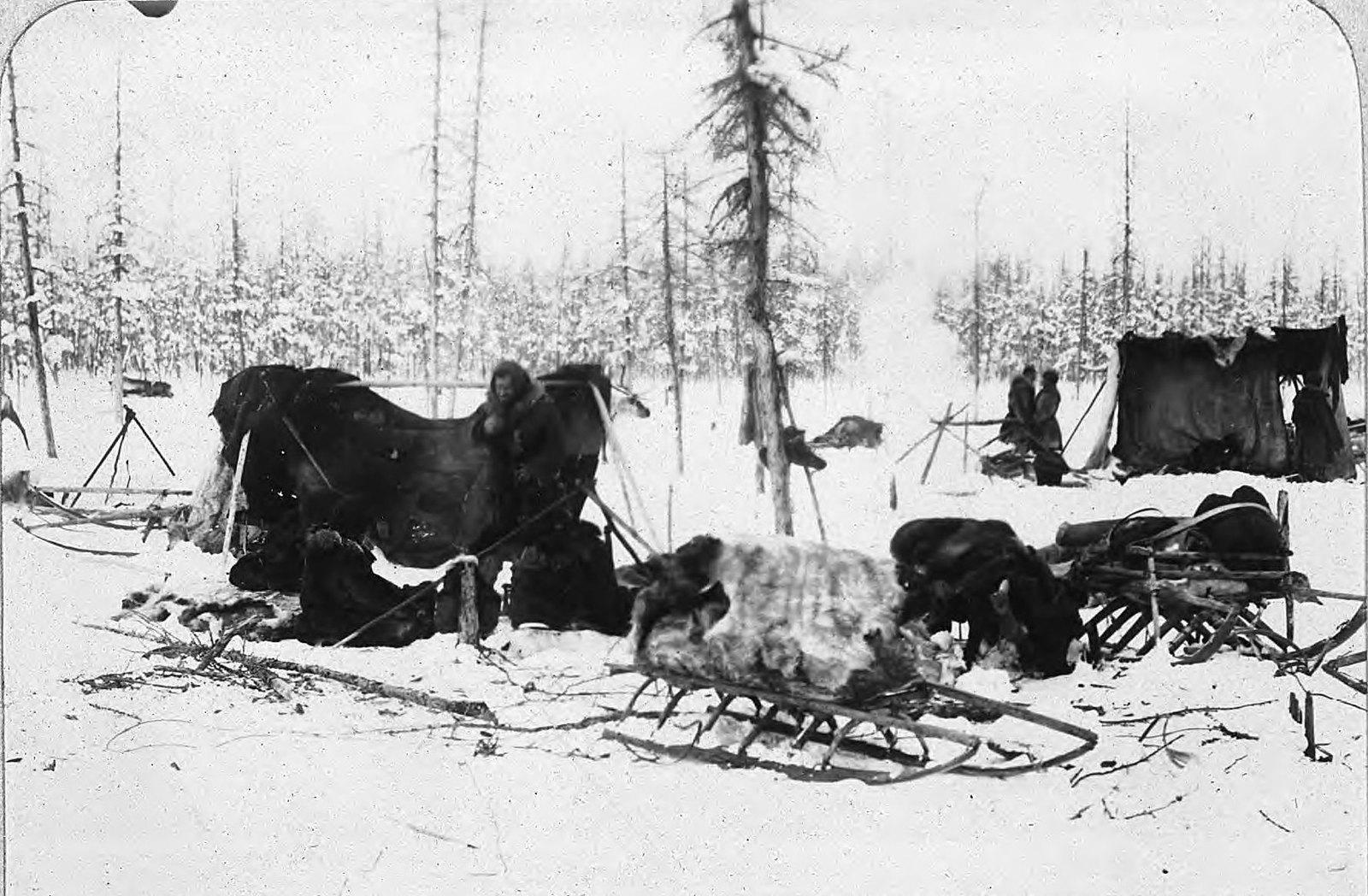 Палатка и оленья упряжь в лесу зимой