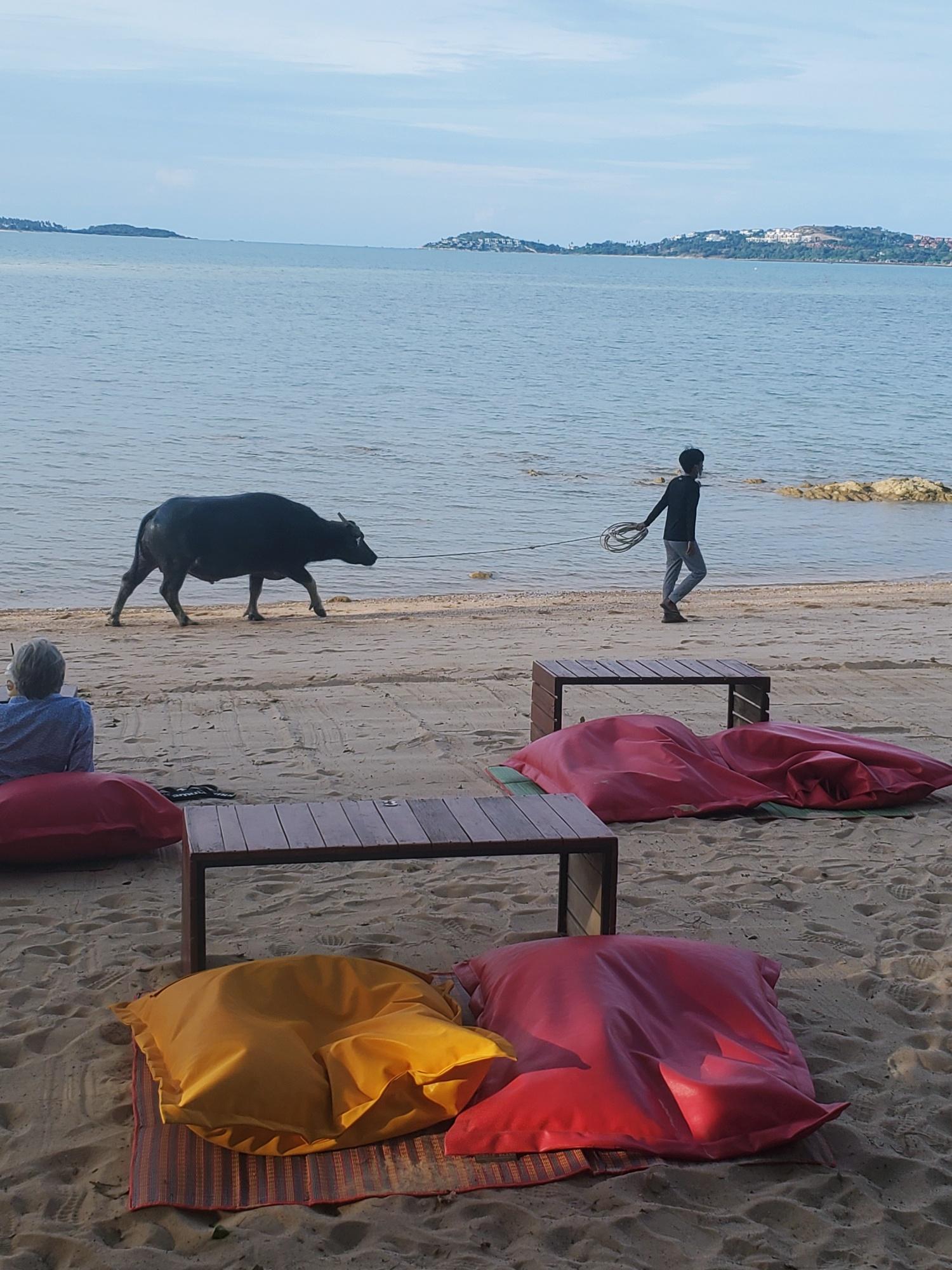Koh Samui bang rak beach