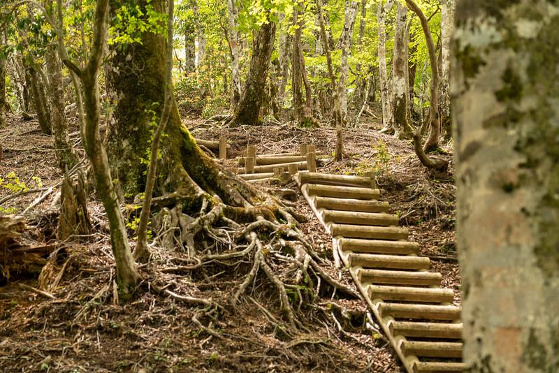 畦ヶ丸の山頂に続く階段