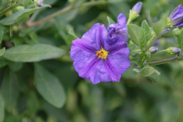Garden - 7154