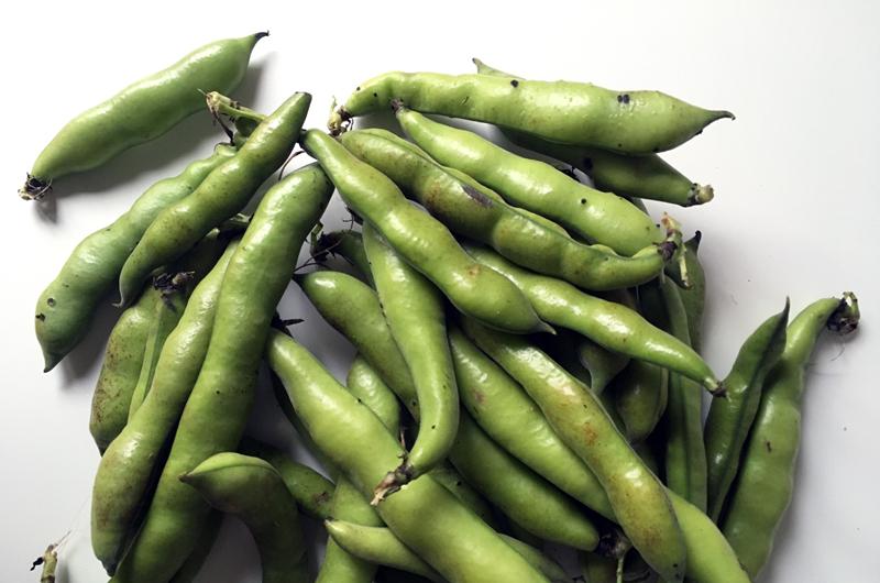 Lasanha fingida de vegetais