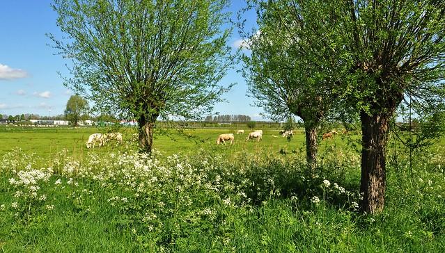 Rural spring view