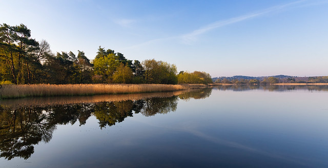 Reflections at Frensham