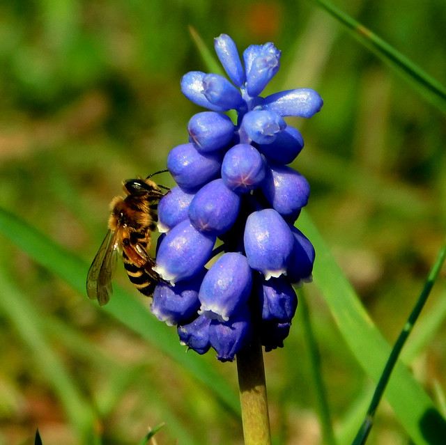 Pszczoła * EXPLORE