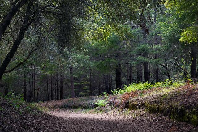 Forest Spotlight